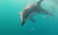 NZ Unterwasser