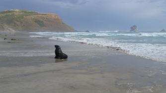 NZ Sandfly Bay