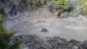 NZ Mud Pool