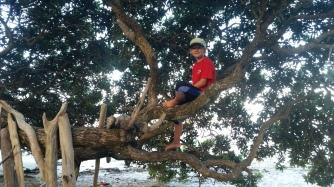 NZ Orokawa Baum