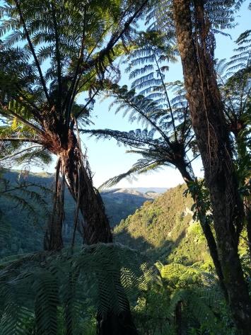 NZ Tarawera Wanderung
