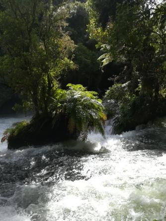 NZ Okere Falls