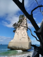 NZ Cathedral Cove Felsnadel