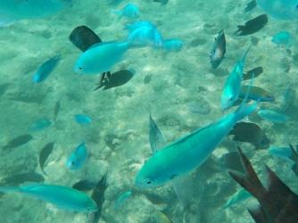 Vanuatu Fischreichtum