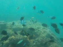 Vanuatu Fischschwarm