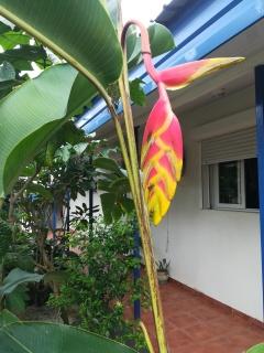 Vanuatu Hotelgrbaeude
