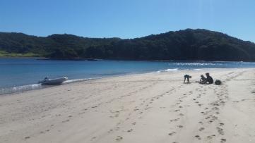 NZ Strand im Herbst