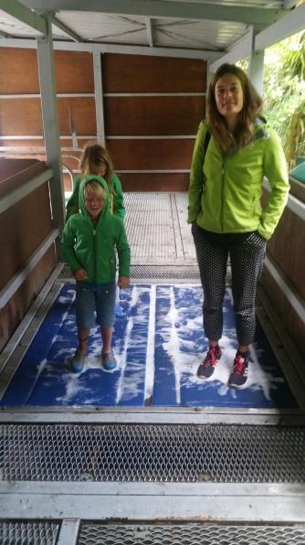 NZ Schuhe reinigen - gegen Kauri-Krankheit