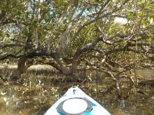 NZ Kajak zwischen Mangroven