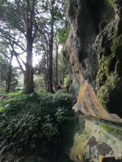 NZ Wald um Waipu Cave