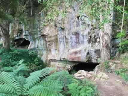 NZ Eingang Waipu Cave