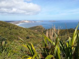 NZ Kueste am Cape Reinga
