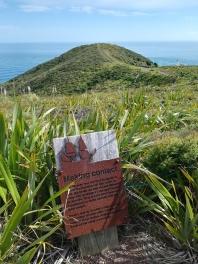 NZ Weg zum Cape Reinga