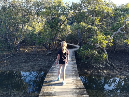 NZ Wandern im Mangrovenwald