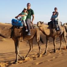 Kamele wackeln ziemlich