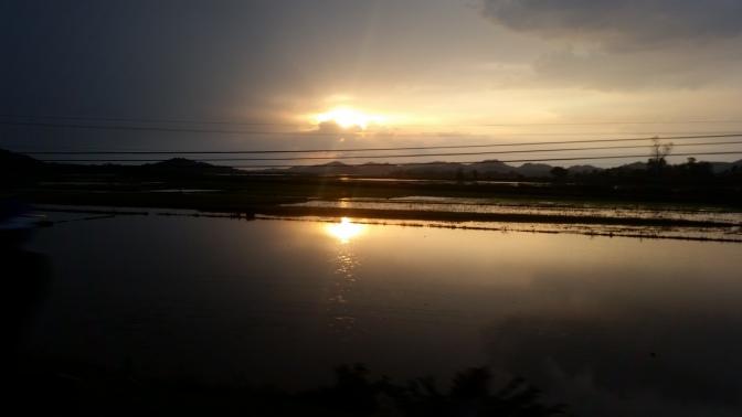 Reisfelder im Abendlicht