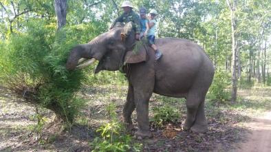 Gefraessiger Elefant Tongan