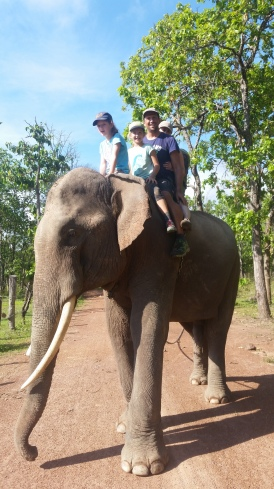 Friedlicher Elefantenbulle