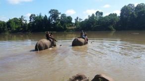 Baden auf Elefanten