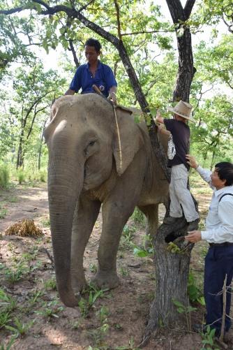 Aufstieg auf den Elefant