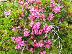 Beeindruckende Blütenmenge
